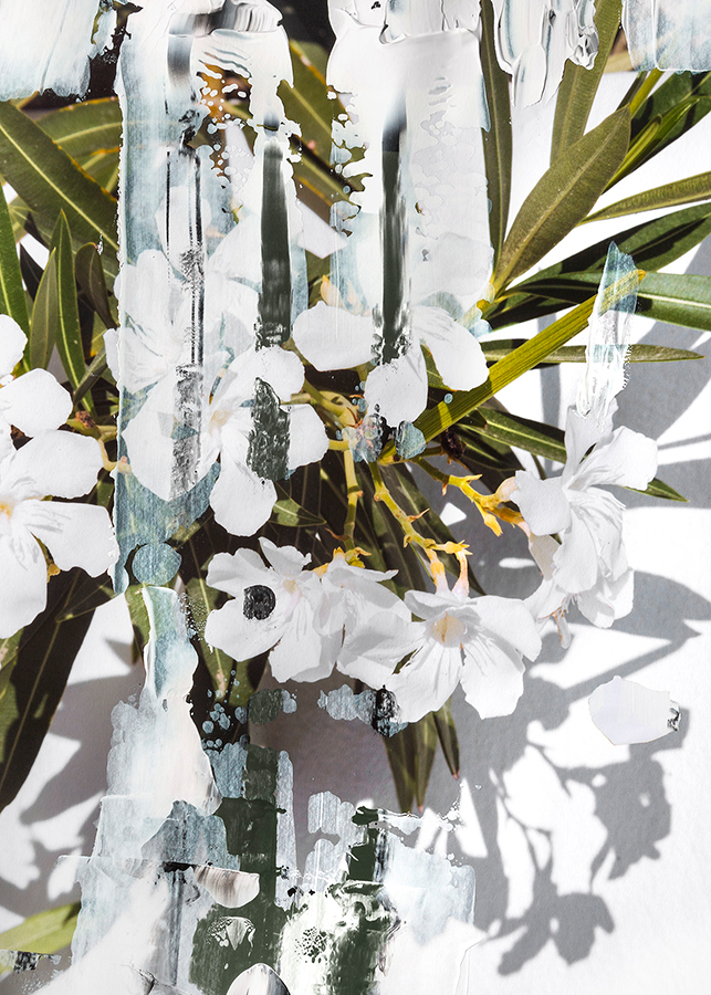 Doulgas Mandry, Unseen Sights, Flowers I, 2015, Archival Pigment Print, 64 x 45 cm, Edition 5 & 2 AP