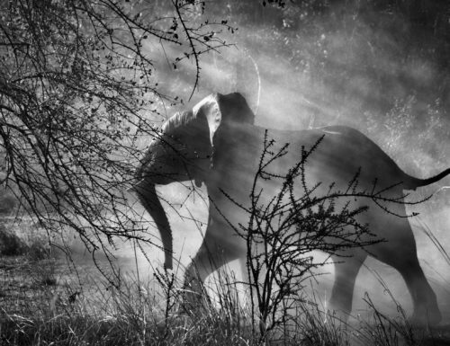Elephants hunted by poachers in Zambia, Kafue National Park, 2010, © Sebastião Salgado