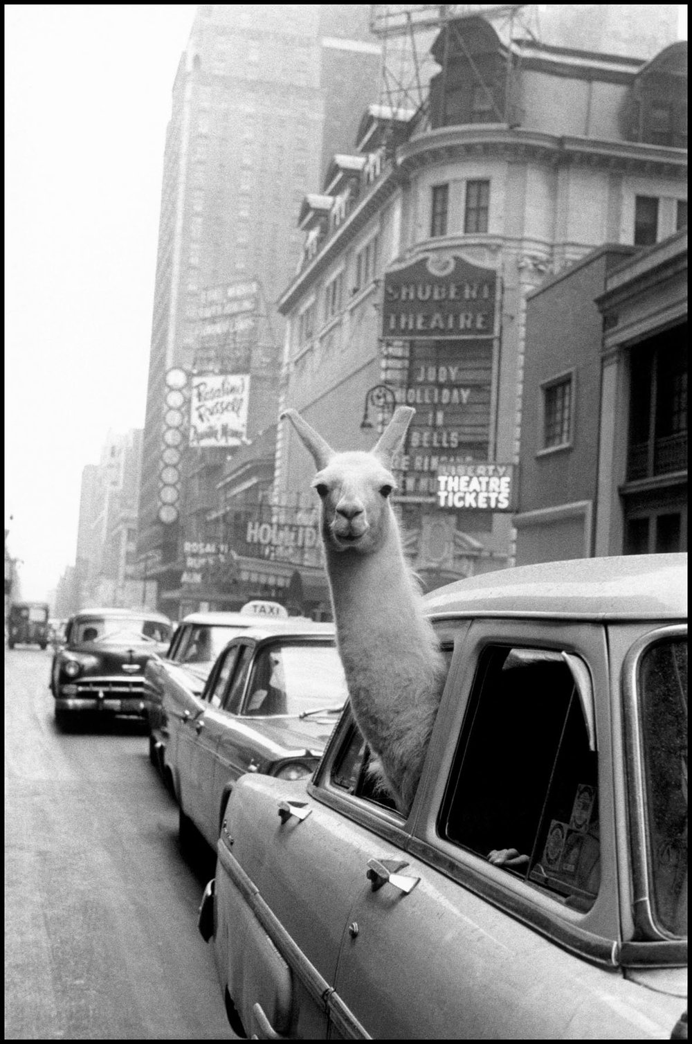 Un lama a Times Square, New York, 1957 | Fotohof Archiv | Inge Morath Foundation | Magnum Photos