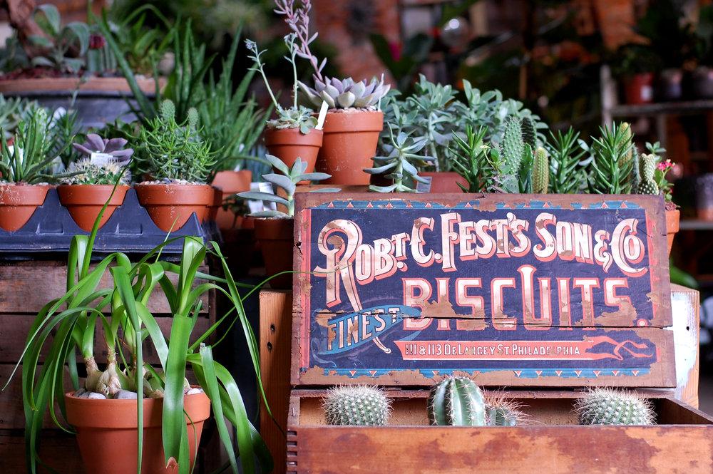 Cactus and succulent display at Urban Jungle in Philadelphia.