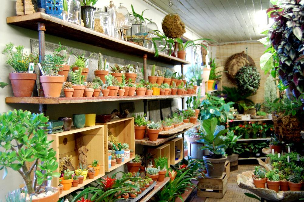 Greenhouse hanging plants at Urban Jungle Philadelphia.