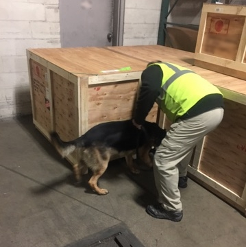 GK9PG's Explosive Detection Canine Team Searching Cargo