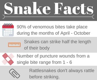 Snake Facts.jpg