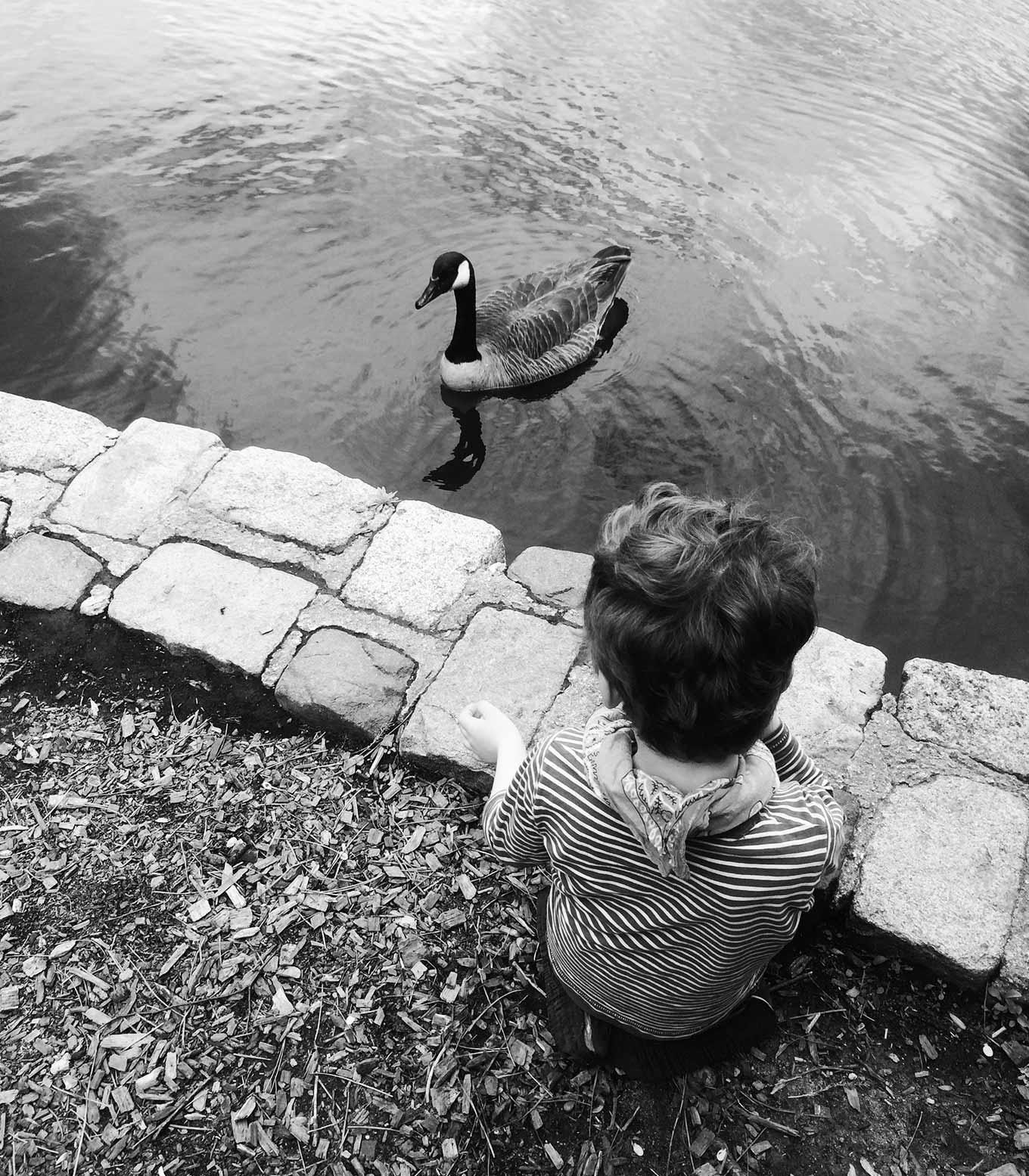 2014-05-28-c-pond@2x