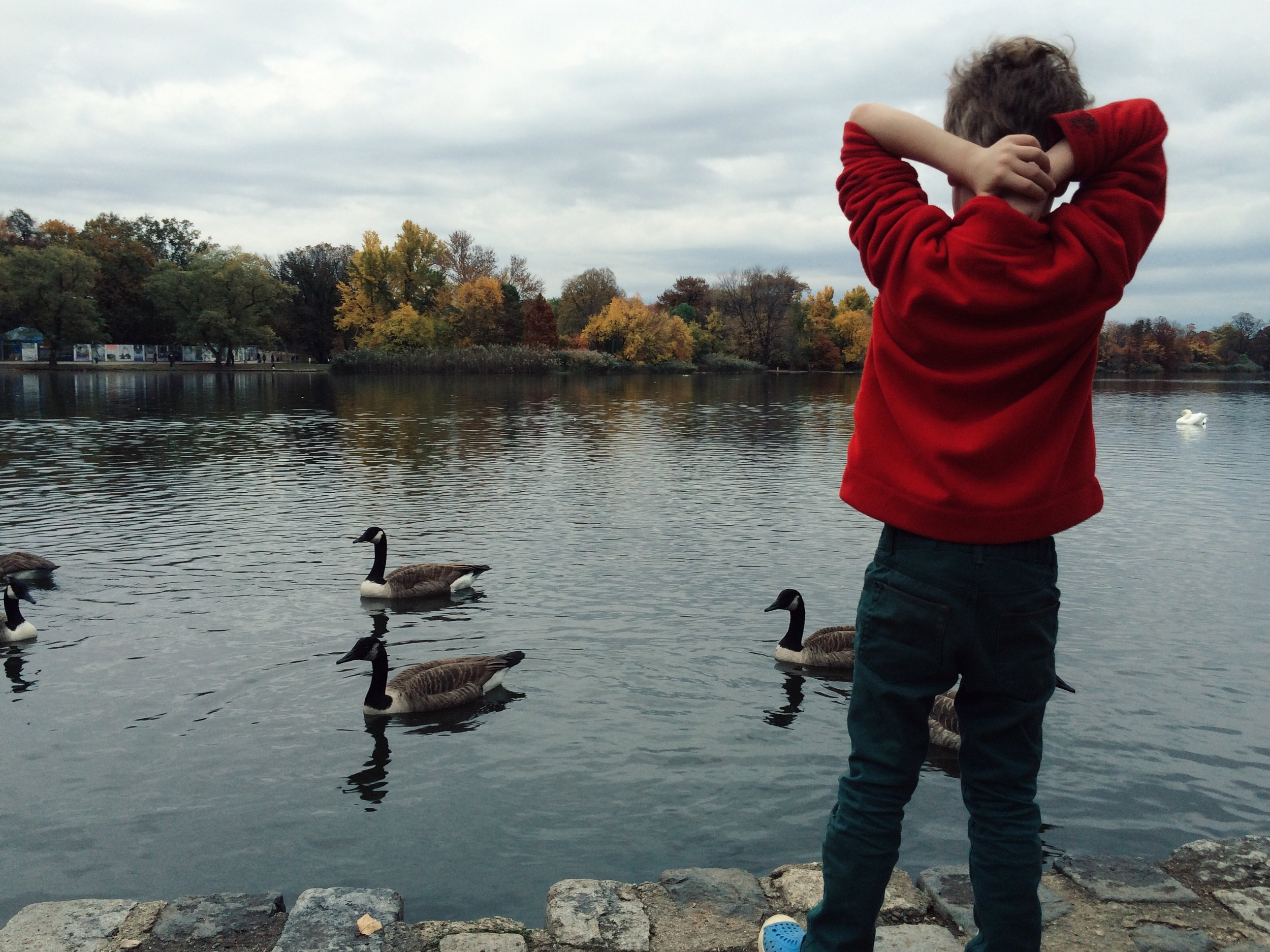 C with geese