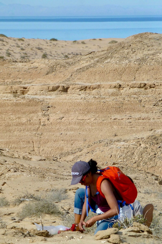 Mairin Balisi,   PhD   , Paleoecology, Evolution