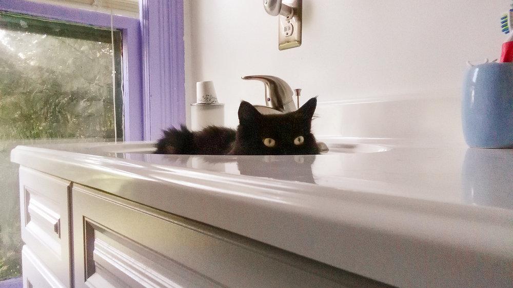 Cat-AT-Plumbing-Roanoke-Virginia