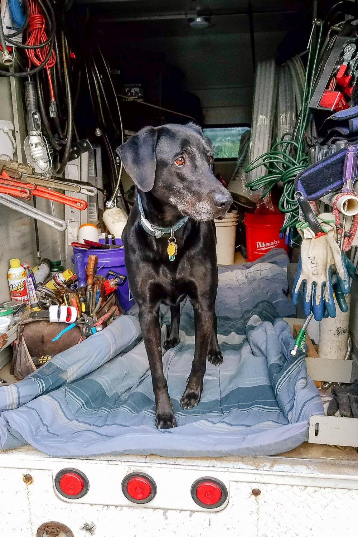Dog-AT-Plumbing-Roanoke-Virginia