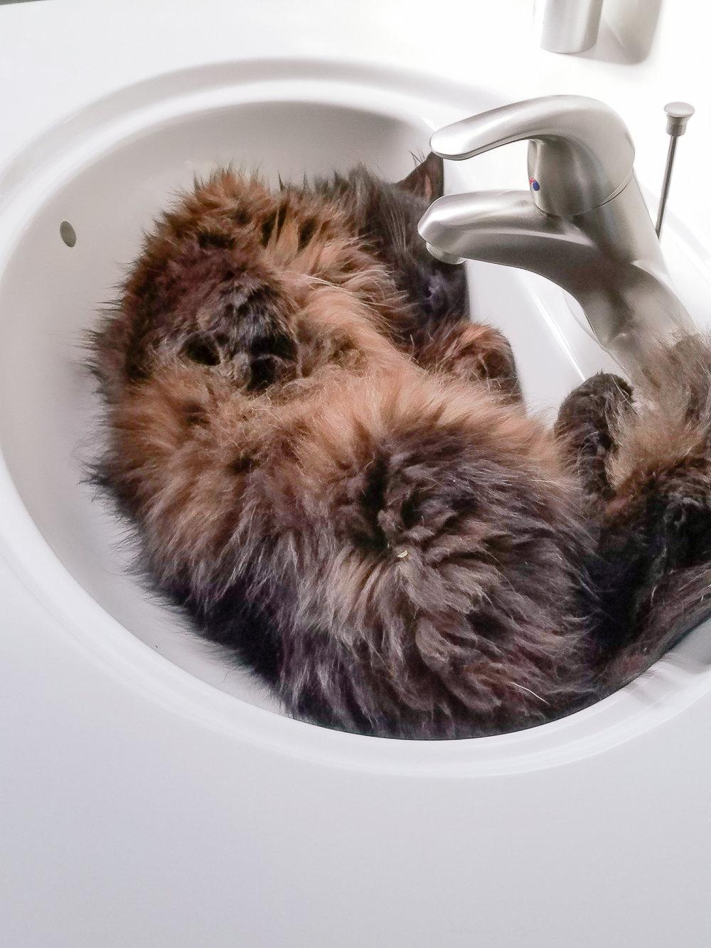 Cat-Sink-AT-Plumbing-Roanoke-Virginia