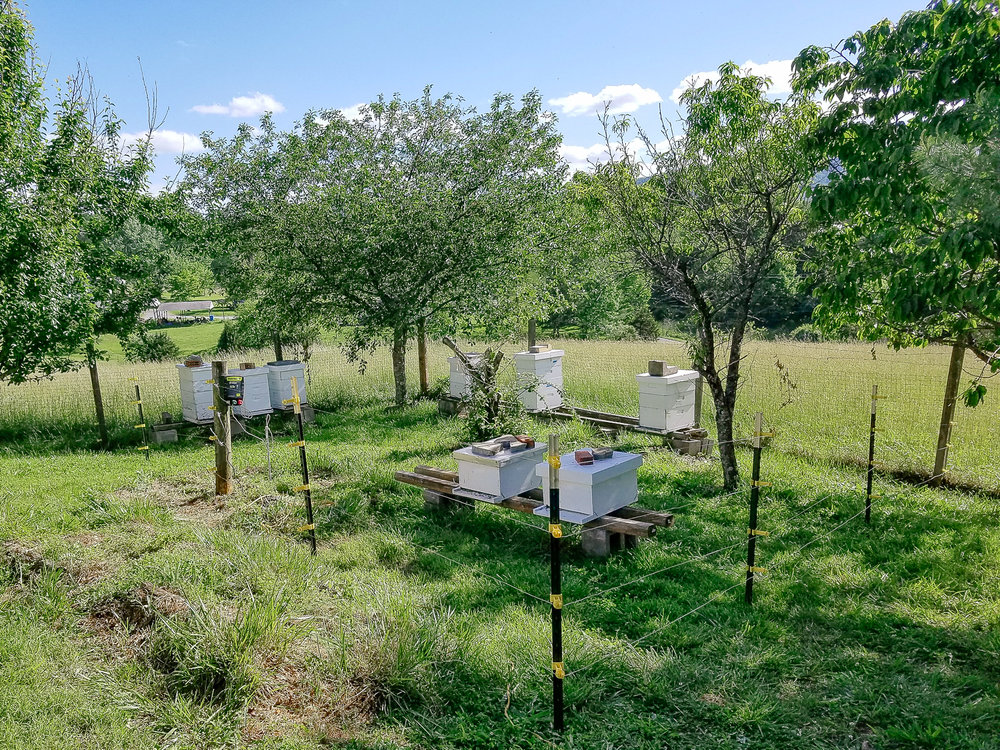 Bee-Hive-AT-Plumbing-Roanoke-Virginia
