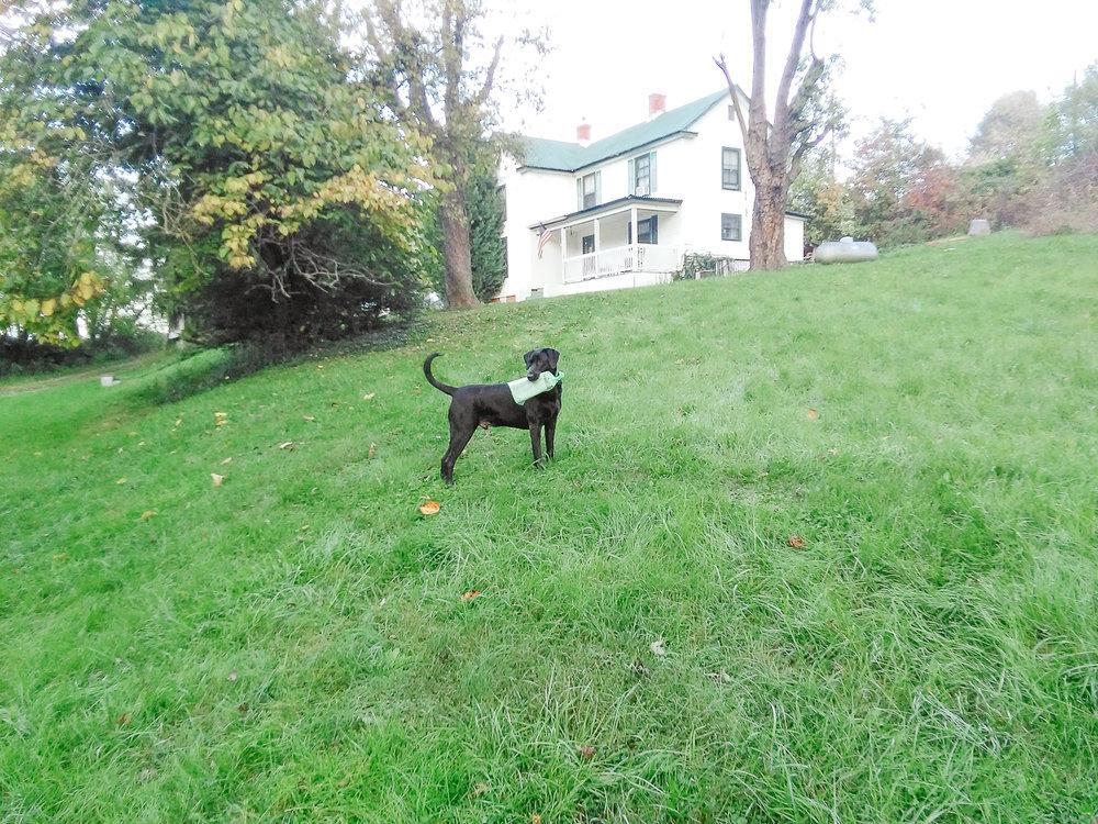 Dog-Paper-AT-Plumbing-Roanoke-Virginia