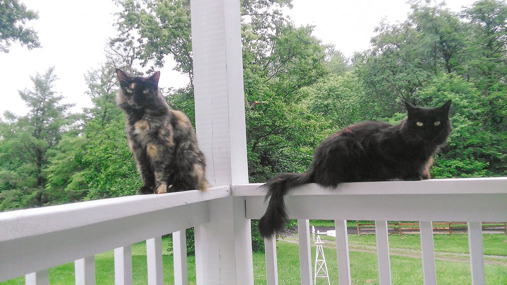 Cats-AT-Plumbing-Roanoke-Virginia
