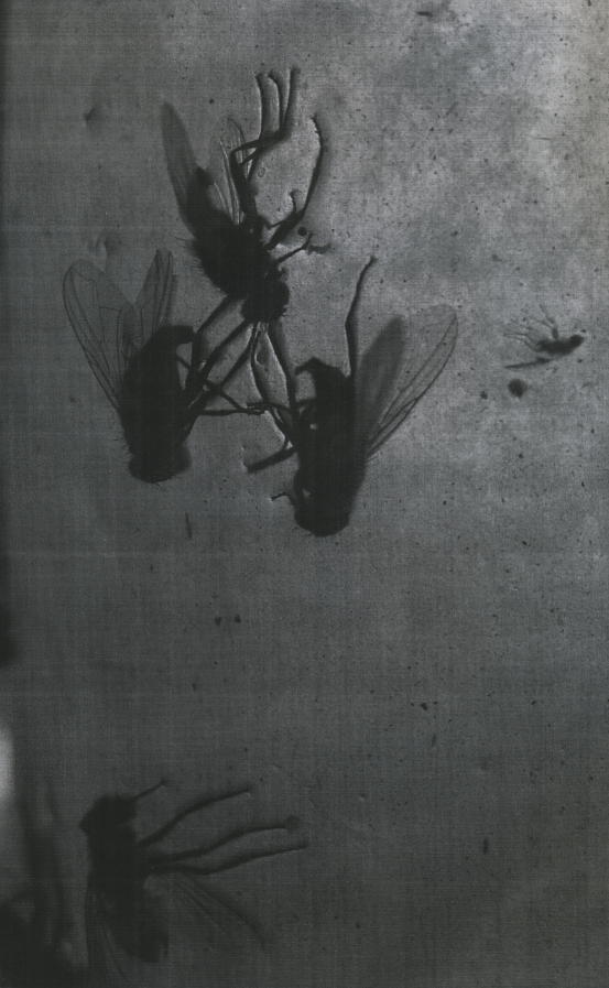 flugorx2.jpg
