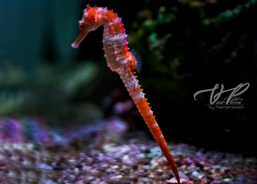 seahorse closeup.png