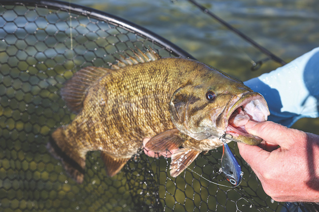 smallmouth-bass-june-tactics-by-ron-sinfelt (1).jpeg