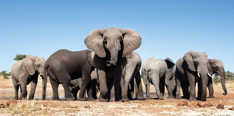 f1062ed05de6 The War on Elephants — A Vegan Life