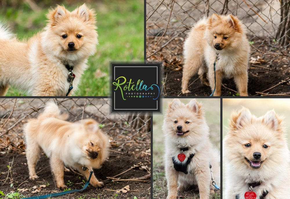 Our dog Grr - Rotella Photography