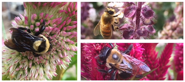 Honey bees abound to join you on your visit to the Farm