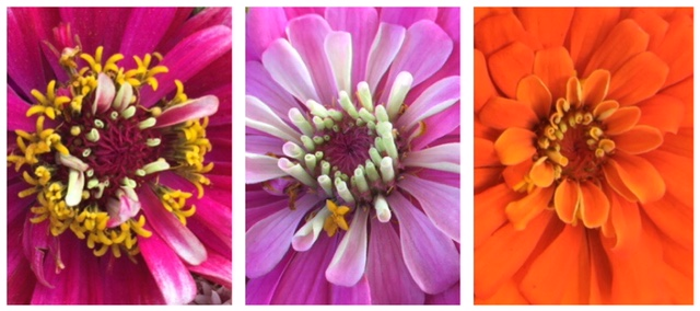 Yes, there are local flowers near you and they include every color imaginable!
