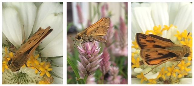 Darnell_white_pollinator_banner_collage.JPG