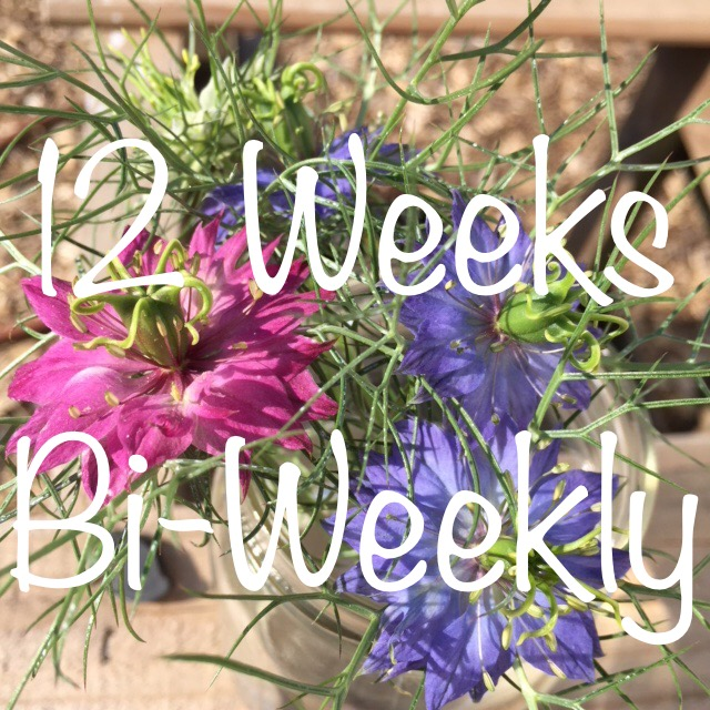 6 Bouquets, One Every Other Week Over 12 Weeks - $20/bouquet for a total of $120Billed in 3 equal installments of $40Sign-up anytime before Friday, July 12th