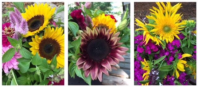 Darnell_sunflower_banner.jpg