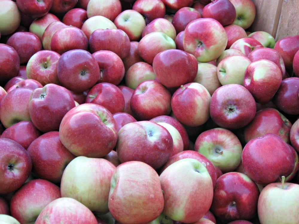 Fishkill Farms Apples.JPG