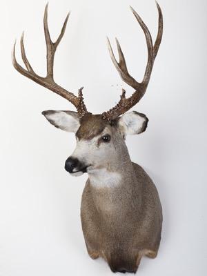 deer4.jpg