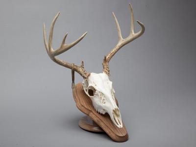 Deer_deskmount.jpg