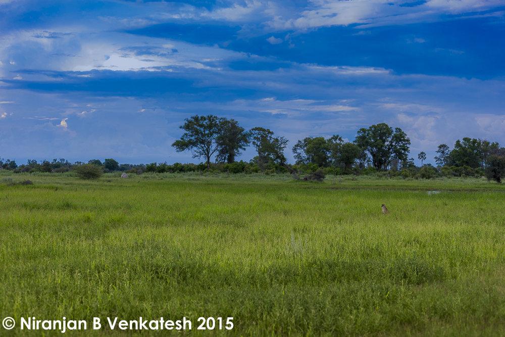 The Okavango Delta !
