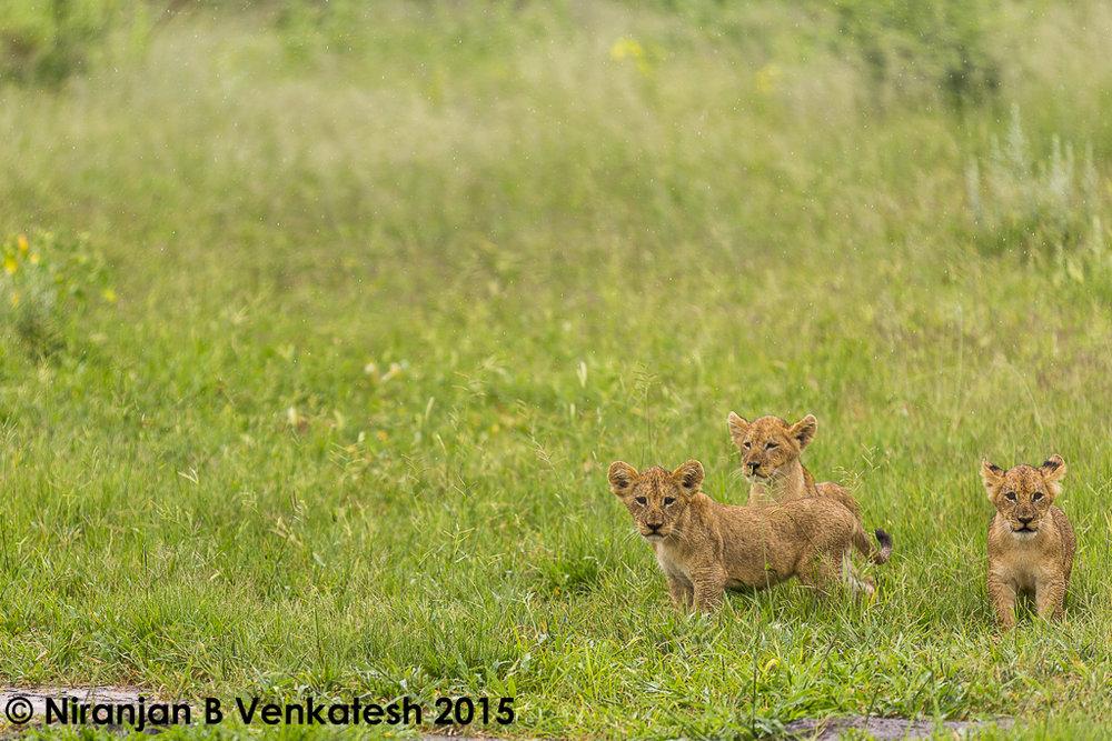 Cute Cubs !