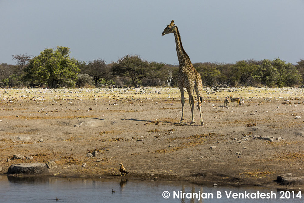 Typical Etosha Waterhole