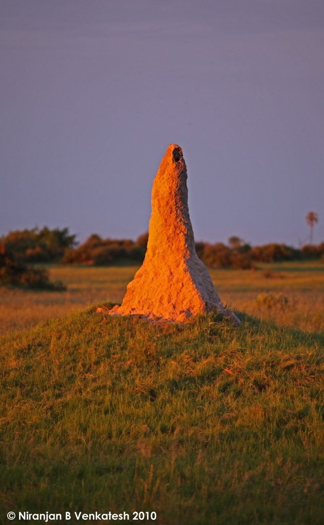 Anthill in Evening Light