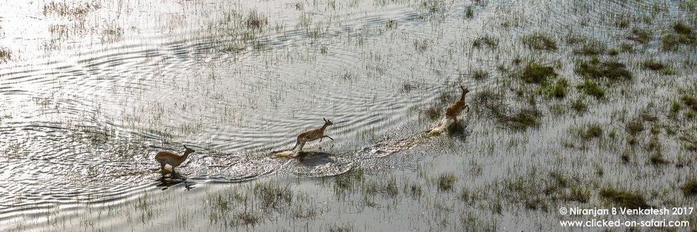 Delta Splashing