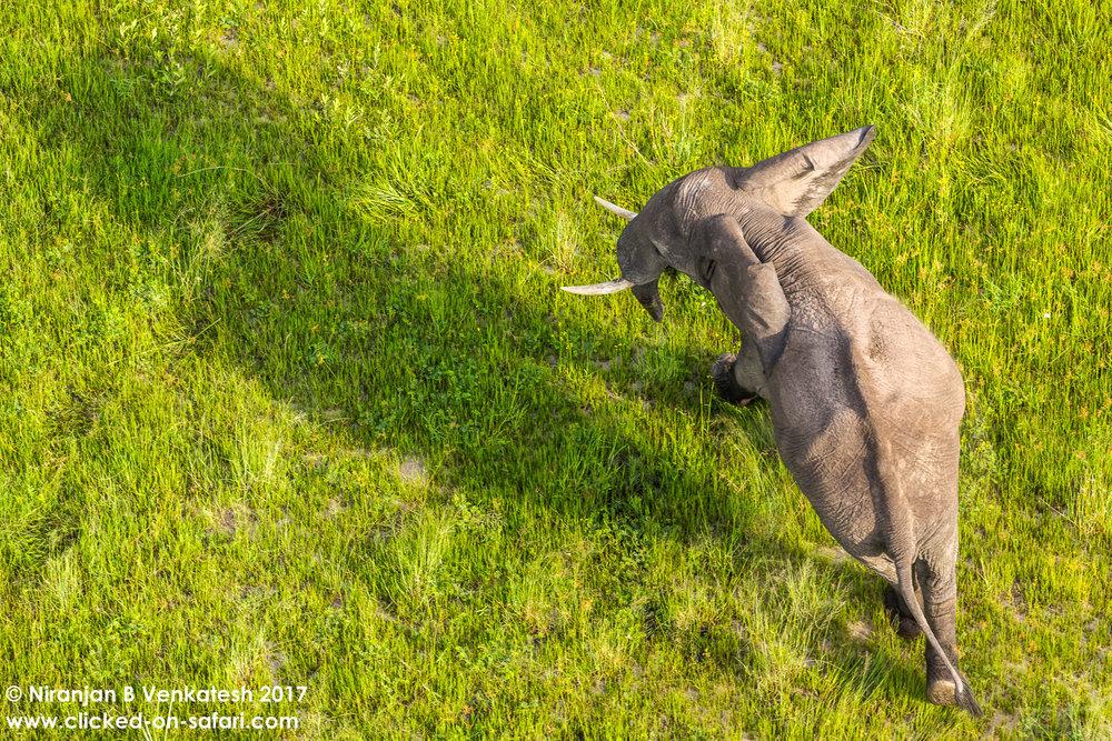 Elephant Back !