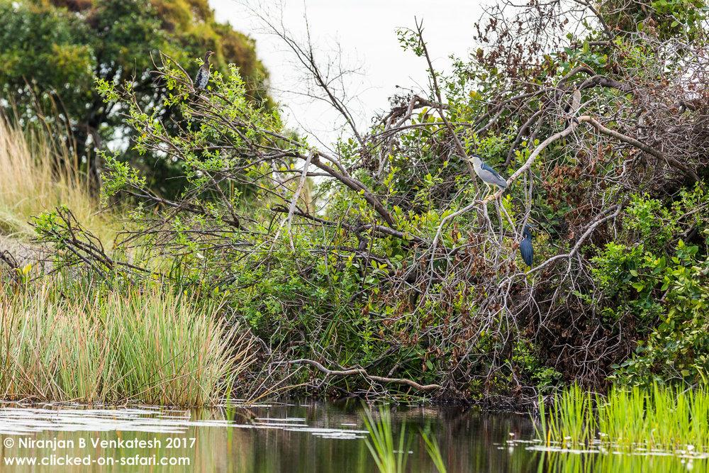 Birding Bush