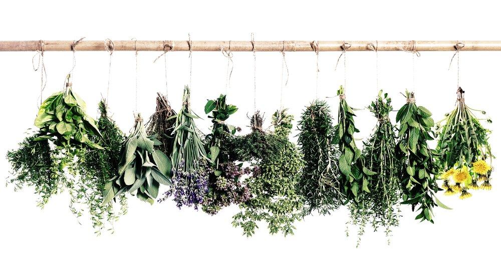 HEAL - Holistic Empowerment and longevity