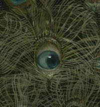 peacock eye5.jpg