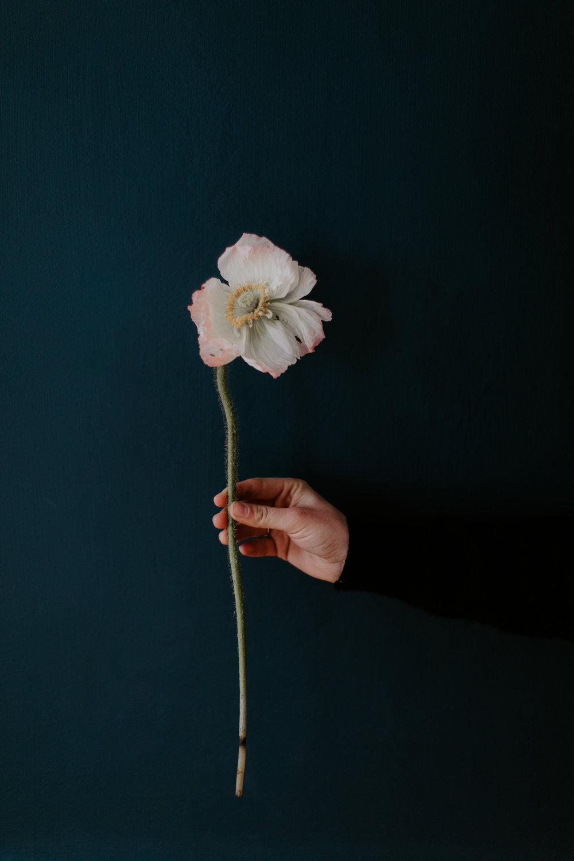 A Floral Thing - Jamie Mercurio Photo-65.jpg