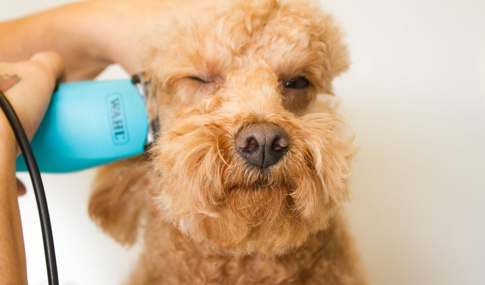 Grooming Services - Keep your pet looking their best with our low stress, professional grooming services.