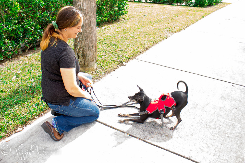 Training Services - Simple training solutions that will tame the wild Beast in your pet and bring peace back to your home.