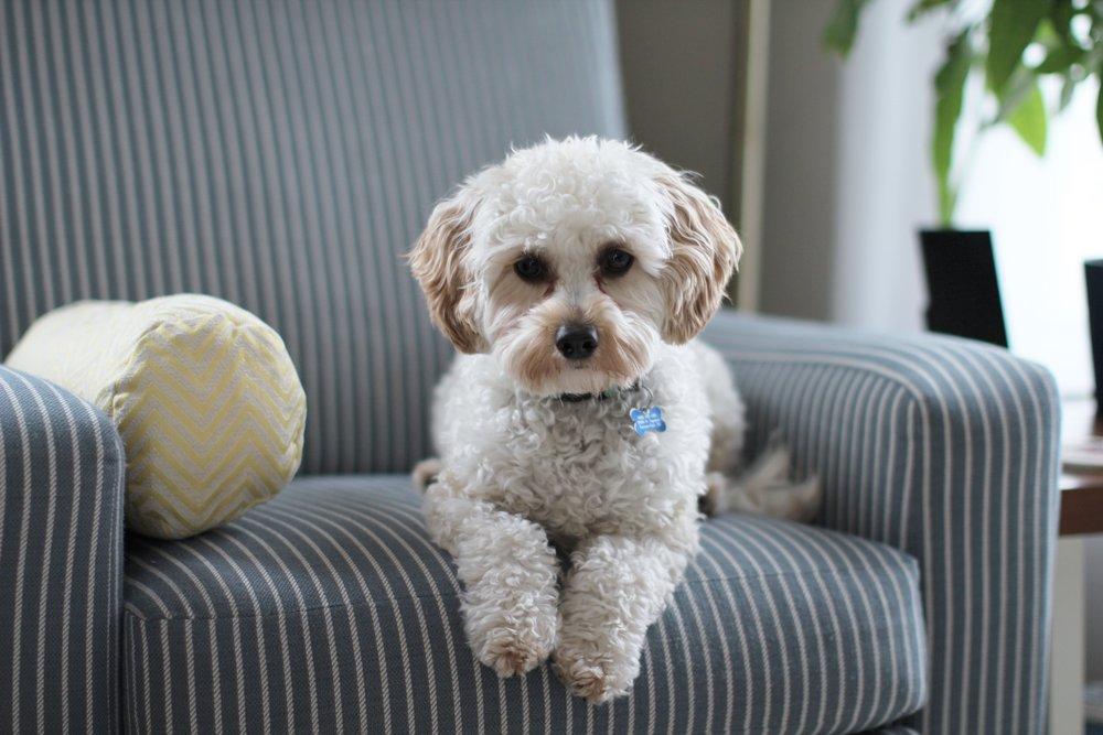 adorable-animal-breed-981062.jpg