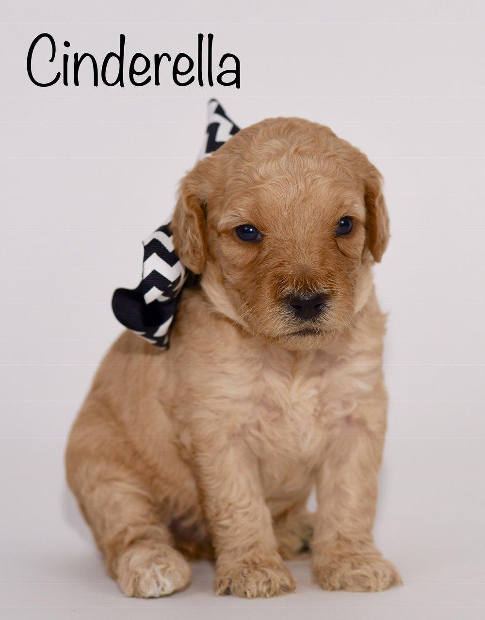 cinderella3weeks.jpg