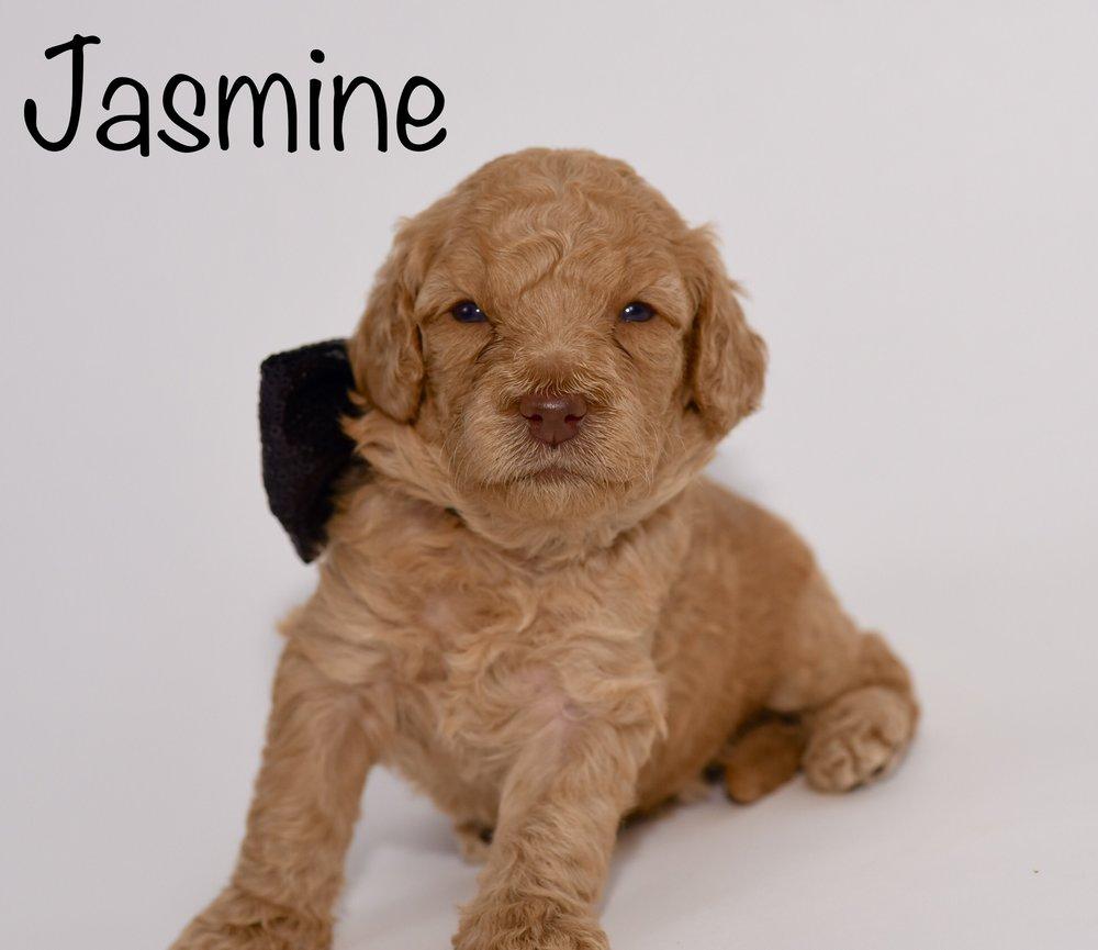 jasmine3weeks.jpg