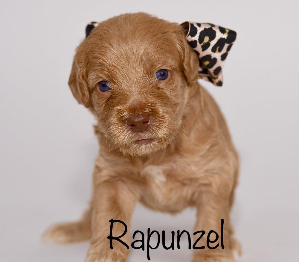 rapunzel3weeks.jpg
