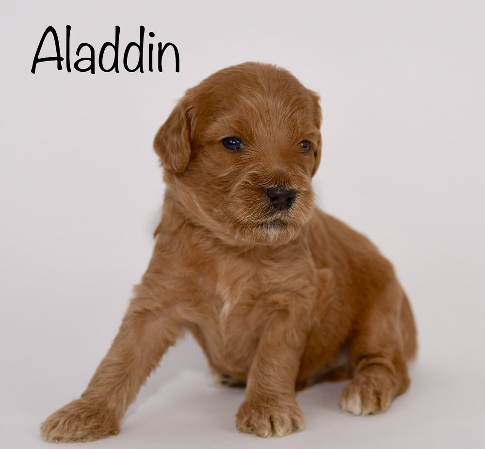 aladdin3weeks.jpg