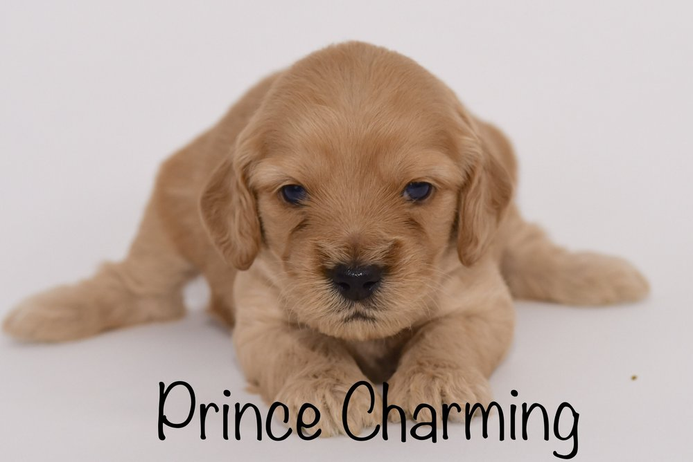 princecharming3weeks.jpg