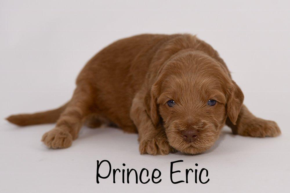 princeeric3weeks.jpg