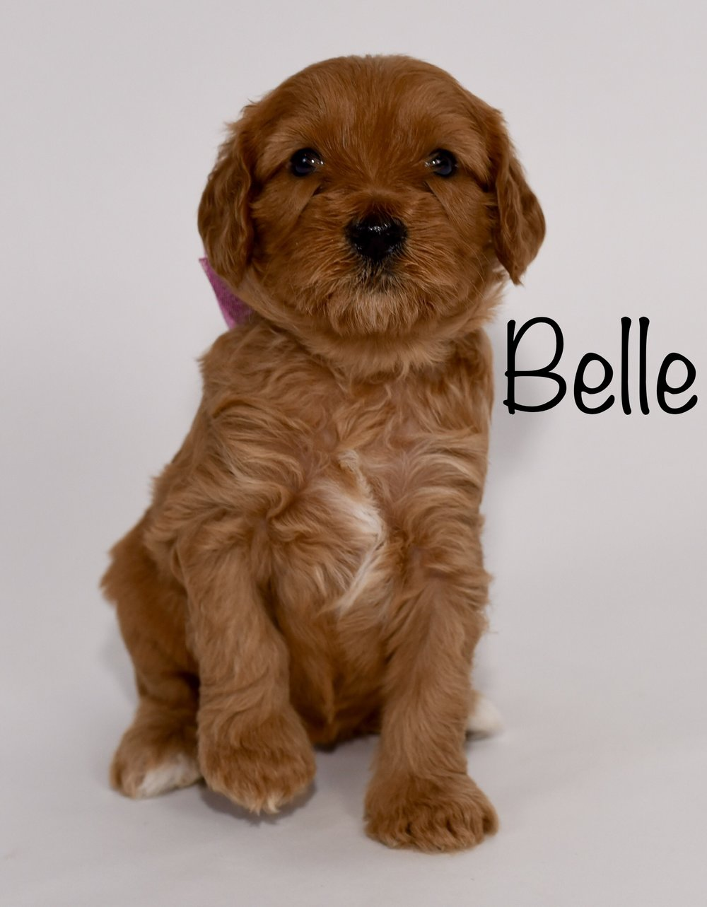 belle4weeks.jpg