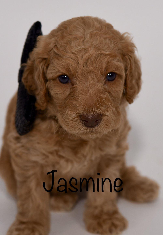 jasmine4weeks.jpg